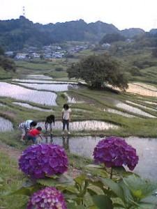 静岡県菊川の棚田と子供たち