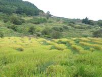 棚田の風景(稲刈り前)
