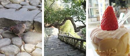 ハトさん、石段と木、イチゴソフト