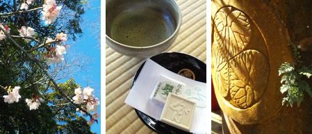 一ノ門の上の寒桜、お抹茶とらくがん、�に金�が泳いでました