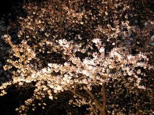静岡市の夜桜スポット