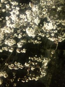 静岡市の夜桜スポット:駿府公園西門橋