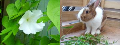 夕顔の花とポン太