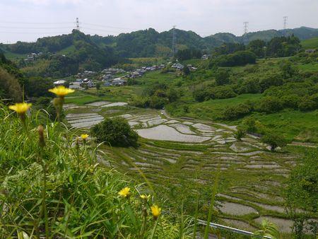 静岡県菊川市のせんがまちの棚田全景