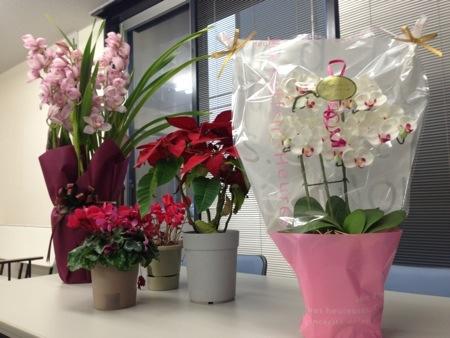 マスダグリーン様よりお祝いの胡蝶蘭をプレゼントしていただきました!