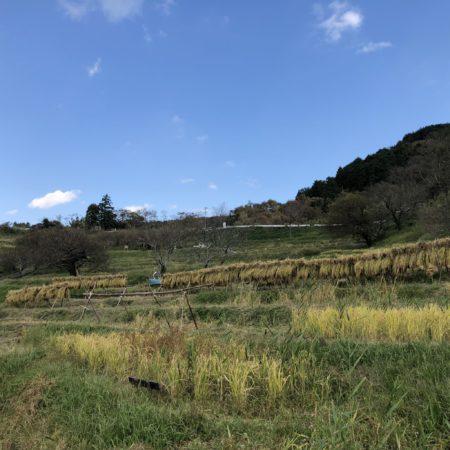 菊川市の棚田「千框」